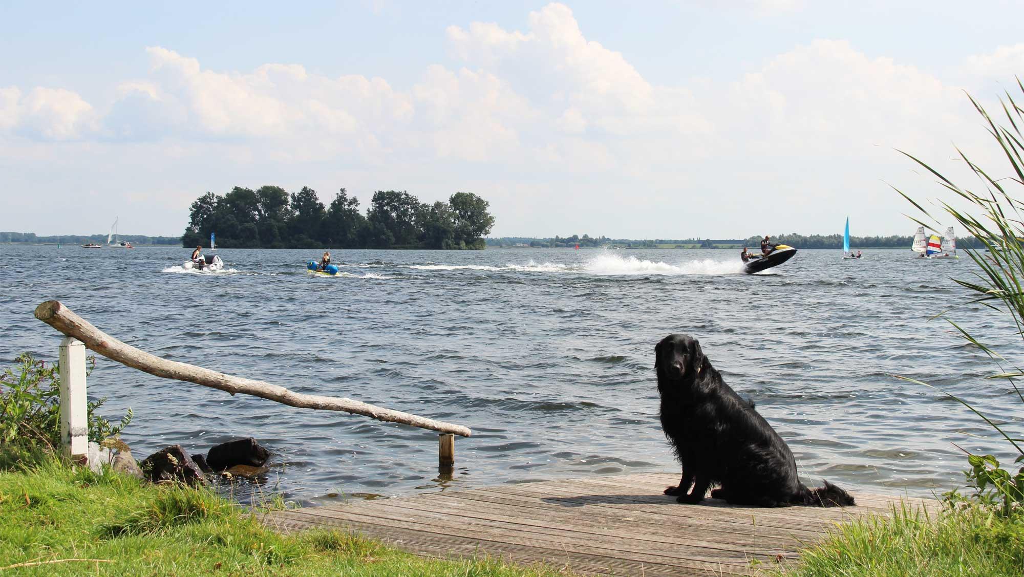 Molecaten Park Flevostrand 32 vakantie met hond