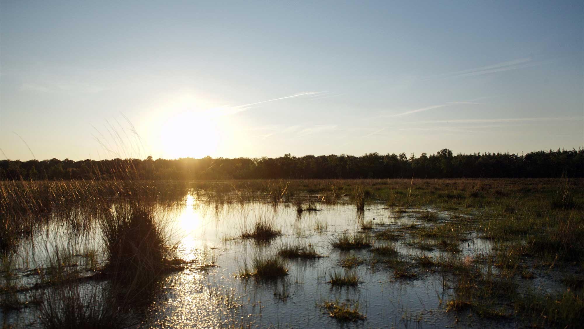 Omgeving Molecaten Park Landgoed Ginkelduin 19 zonsopkomst
