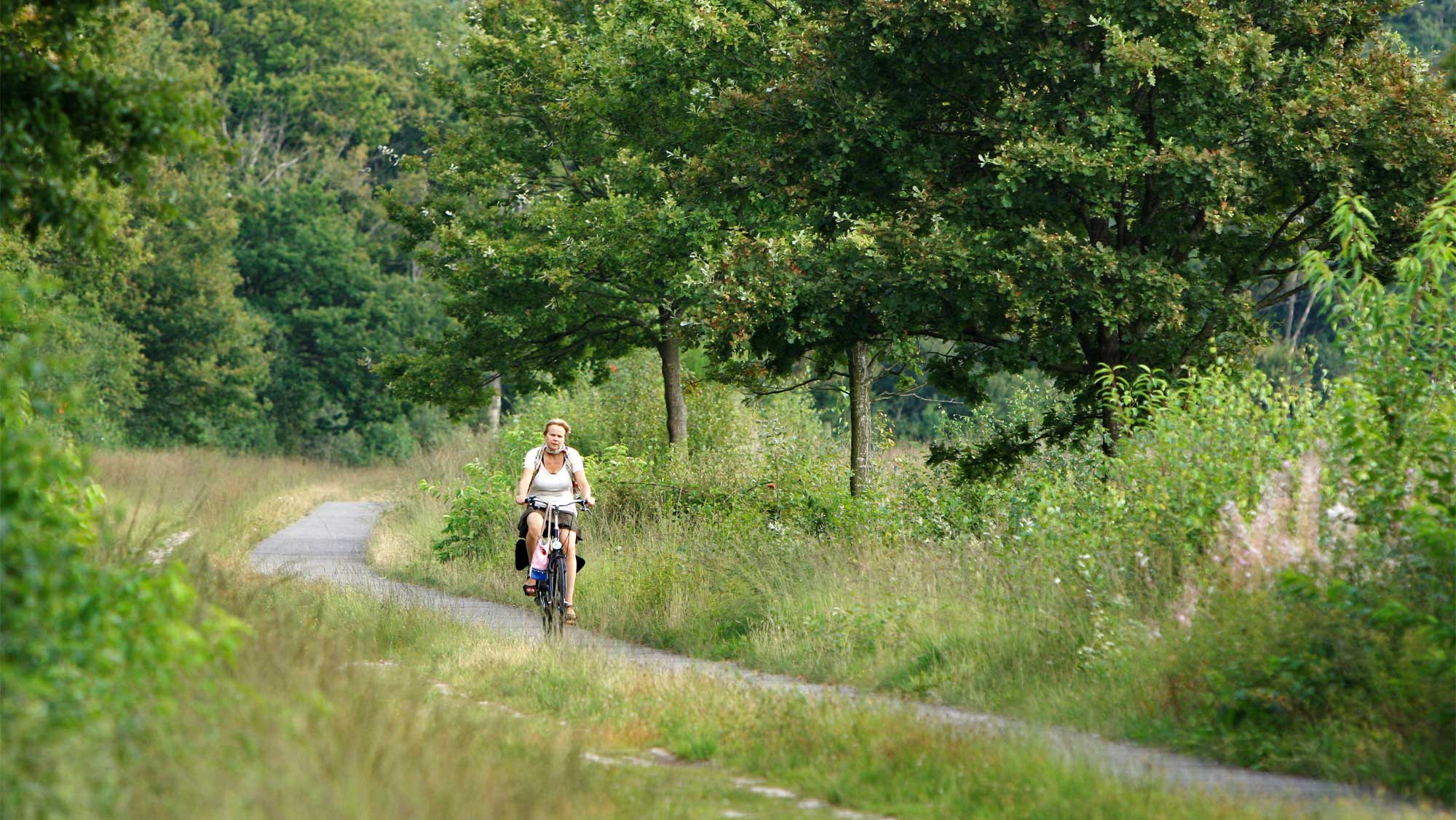 Omgeving Molecaten Park Kuierpad Drenthe 03 fietsen